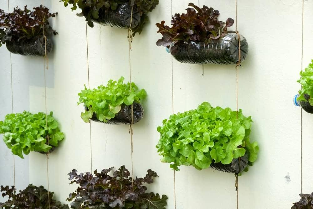 verde indoor giardini verticali portatili italian design institute 1