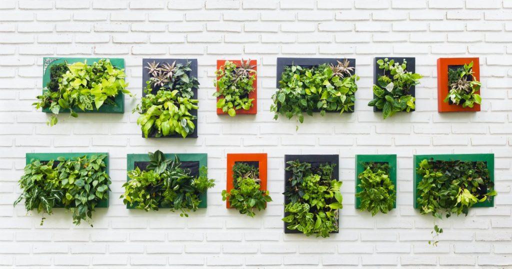 verde indoor
